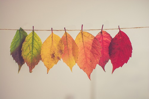 autumn leaves hanging on a string